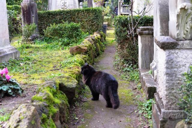 Los gatos de Roma © @igattidellapiramide Facebook