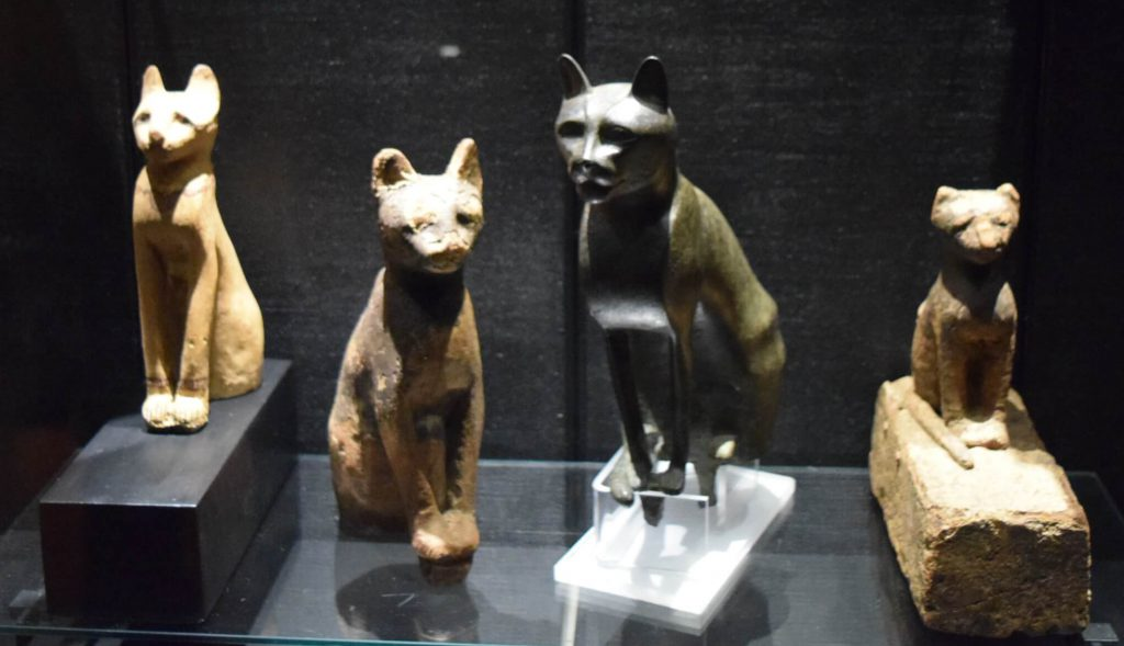 Los gatos de Roma - Museos Vaticanos © Juana Vélez A
