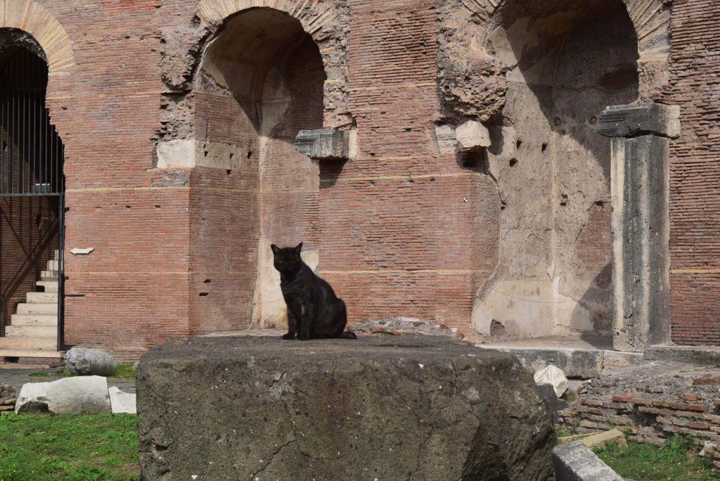 Los gatos de Roma © Juana Vélez A